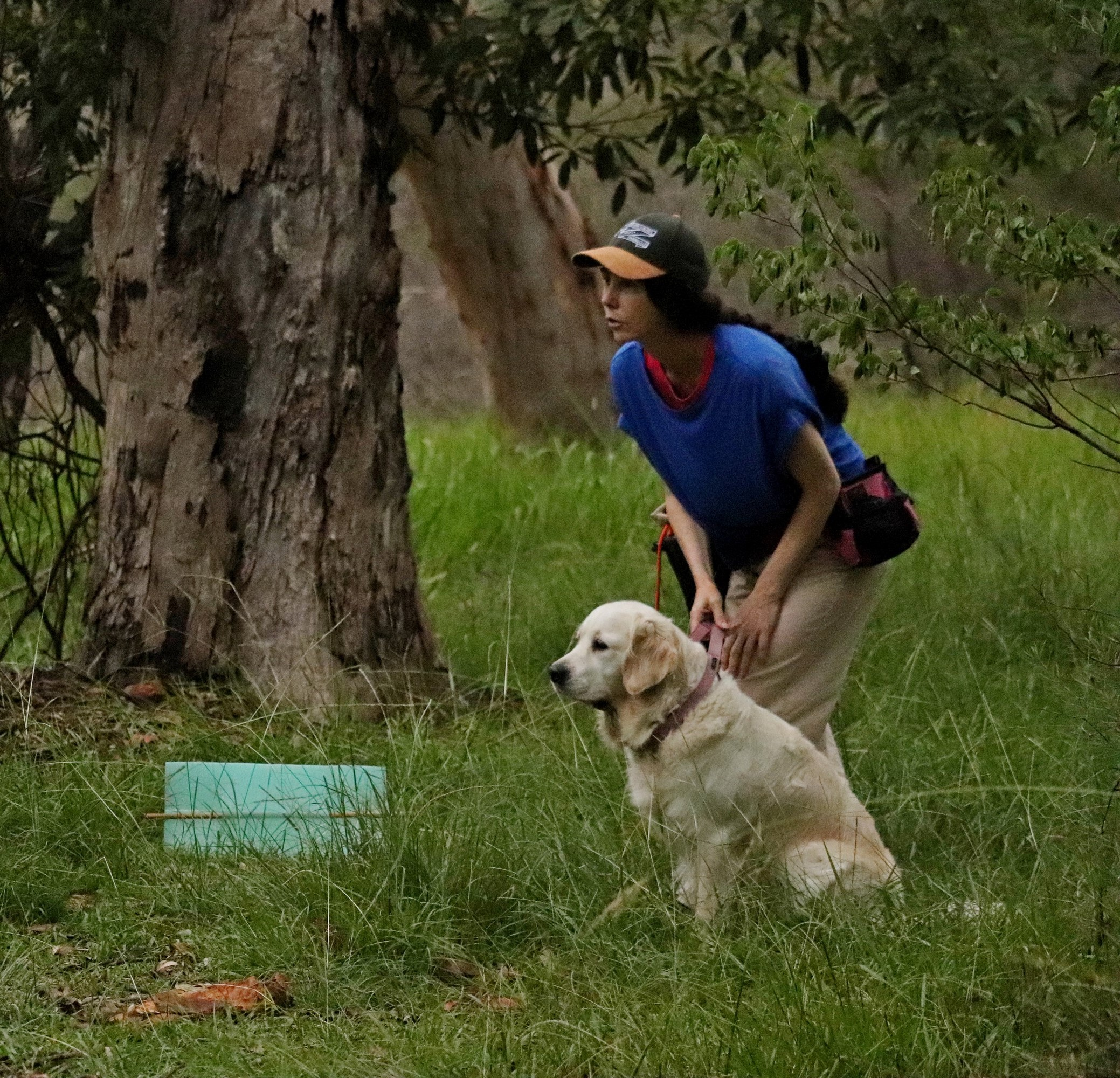 Gundog Member Rebecca about to send Jazz for a retrieve